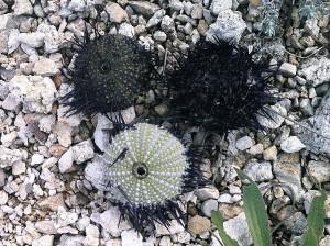 Sur la plage de graviers un reste de pneus et trois oursins marquent les âges de la décomposition.